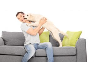 Moving Pet Long Distance